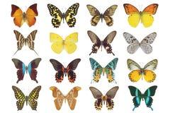 在白色查出的大套多种蝴蝶 免版税库存照片