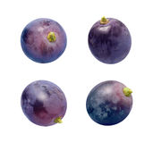 在白色查出的康科德紫葡萄 库存照片