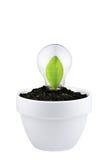 在白色查出的生长绿色想法的概念 库存照片