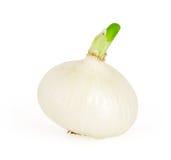 在白色查出的白洋葱 免版税库存图片