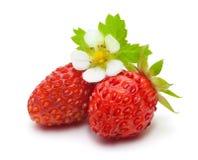 在白色查出的野草莓 图库摄影