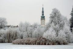 在白色树冰的树 库存照片