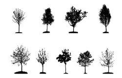 在白色树剪影隔绝的套 免版税库存照片