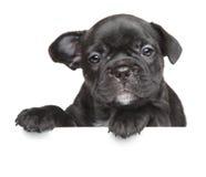 在白色横幅上的小狗 免版税库存图片