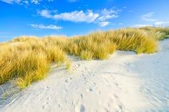 在白色沙丘的草靠岸和蓝天 库存照片