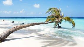 在白色沙子海滩和绿松石cristal水的棕榈树 库存图片