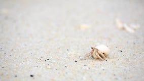 在沙子海滩的寄居蟹 免版税图库摄影