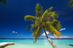 在白色沙子海滩的棕榈在热带天堂马尔代夫海岛上 免版税库存照片