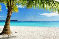 在白色沙子海滩的绿色树 库存照片
