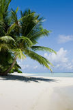 在白色沙子海滩的绿色树 库存图片