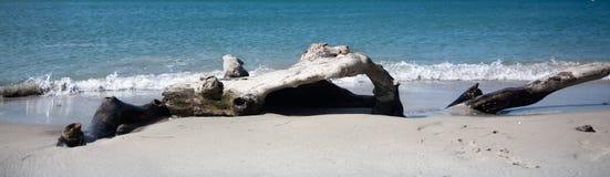在白色沙子热带海滩的漂流木头在海浪期间 库存照片