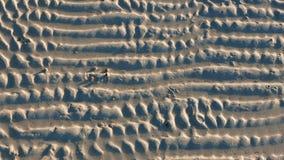 在白色沙子的海洋蜗牛 影视素材