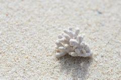 在白色沙子的白色珊瑚 库存照片