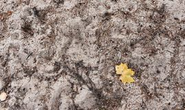 在白色沙子纹理的黄色秋叶 库存图片