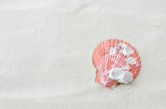 在白色沙子背景的美丽的贝壳 库存照片