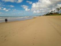 在白色沙滩的可可椰子树在波尔图de加利尼亚斯岛,伯南布哥,巴西 免版税库存图片