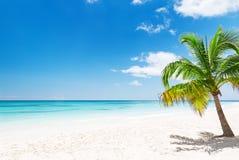 在白色沙滩的可可椰子树在蓬塔Cana,多米尼加共和国 免版税库存照片