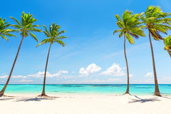 在白色沙滩的可可椰子树 图库摄影
