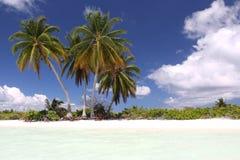 在白色沙滩的椰子树 图库摄影