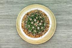 在白色泥罐,有拷贝空间的室内植物的一个仙人掌 免版税图库摄影