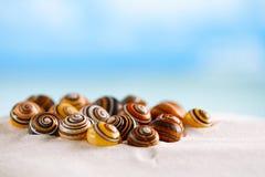 在白色海滩沙子的明亮的polymita壳在太阳下点燃 免版税库存照片