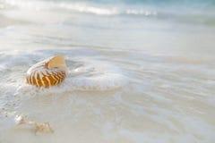 在白色海滩沙子的舡鱼壳由海波浪冲了 免版税图库摄影
