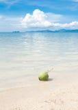 在白色海滩沙子的绿色椰子 免版税图库摄影