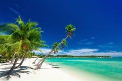 在白色海滩的棕榈树在种植园海岛,斐济 免版税库存图片
