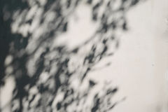 在白色混凝土墙样式的树阴影 免版税库存照片