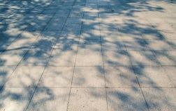 在白色混凝土的树阴影 图库摄影