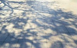 在白色混凝土的树阴影 免版税图库摄影