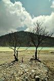 在白色火山口岩石含硫地板上的贫瘠看的树  免版税库存照片