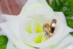 在白色玫瑰的婚戒 库存照片