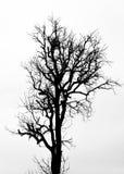 在白色的一个树剪影 图库摄影