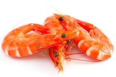 在白色的三只虾 免版税库存照片