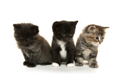 在白色的三只逗人喜爱的小猫 库存图片
