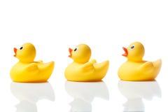 在白色的三只黄色橡胶鸭子与反射 免版税图库摄影