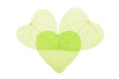 在白色的三片绿色心形的骨骼叶子 库存照片