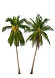 在白色的两棵可可椰子树 库存照片