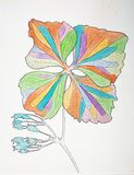在白色的五颜六色的油漆说明的花 库存图片