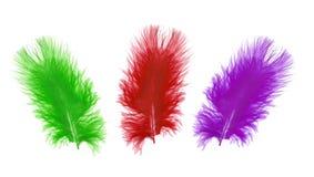 在白色的五颜六色的羽毛 免版税库存照片