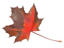 在白色的叶子 免版税库存照片