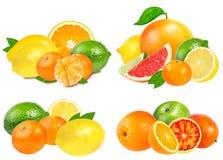 在白色的各种各样的柑橘水果 库存图片