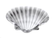 在白色的壳 免版税库存图片