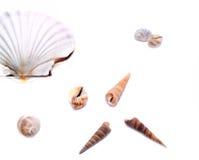 在白色的壳 免版税库存照片