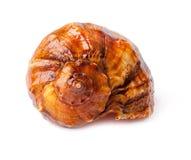 在白色的大尖贝壳。 免版税库存照片