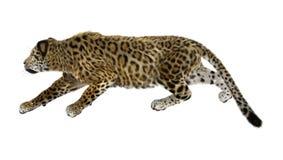 在白色的大猫捷豹汽车 免版税库存图片