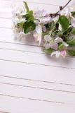 在白色的嫩苹果开花绘了木板条 免版税库存图片