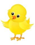 在白色的小鸡例证 库存图片