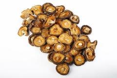 在白色的干蘑菇 免版税库存图片
